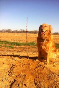 peach farm pup